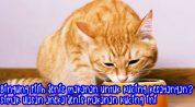 Mengulas Ragam Jenis Makanan Kucing yang Sehat untuk Kucing Kesayangan Anda